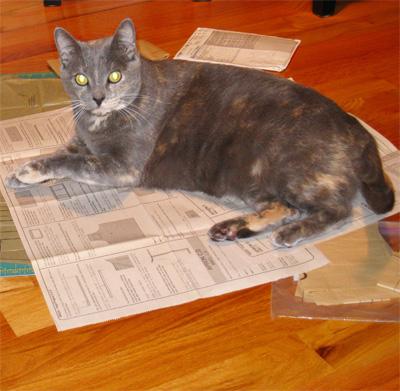 kitty_apron